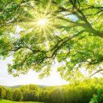 Duurzaam beleggen Groen beleggen Impactbeleggen